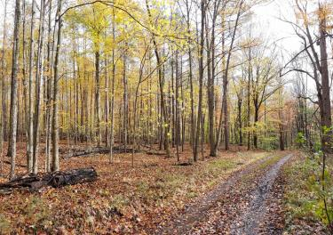 Dirt Road through a Forest during the Fall