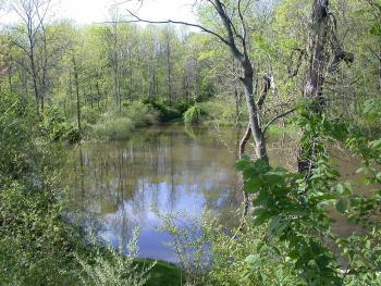 Part of Breakneck Creek in woods during the summer