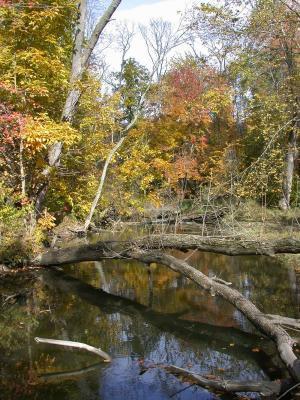 Fallen tree going over Breakneck Creek