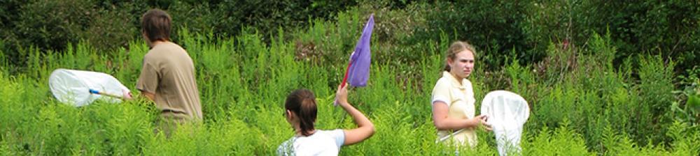 Kids walking through tall grass with nets