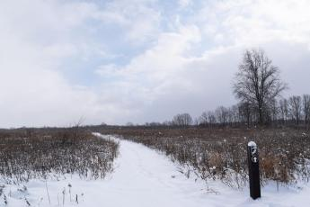Trail through open field covered in snow in the winter