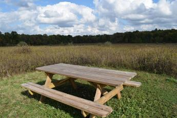 Picnic Table in the middle of a field surrounded by tall grass