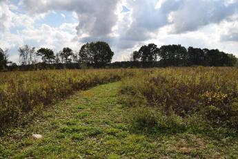 Trail through a field of Tall Grass