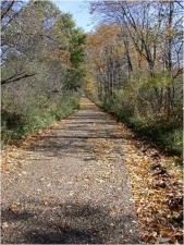 Narrow unpaved road littered with leaves and covered by a canopy of trees