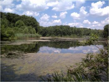 Landscape Shot of Seneca Lake during the Summer