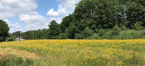 Dix Park field