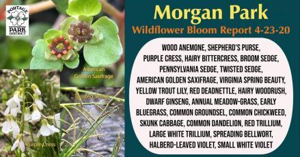Bloom Report 4-23-20