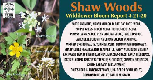 Bloom Report 4-21-2020