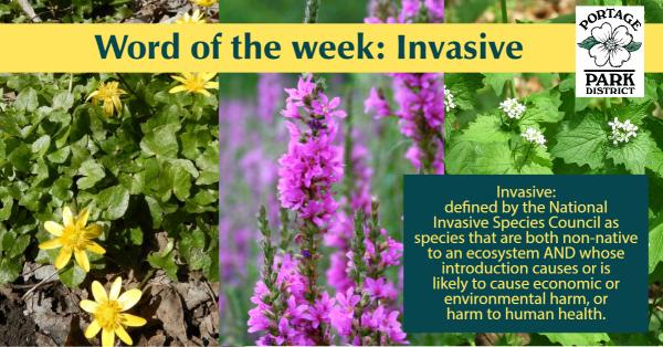 word of the week invasive