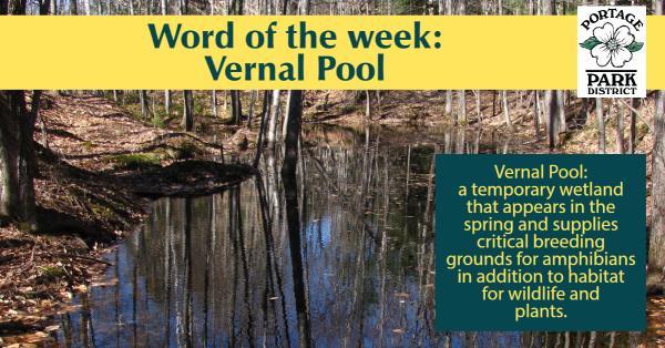 words of the week vernal pool
