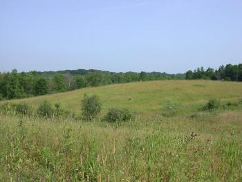 Large Field with Tall Grass surrounded by a Forest
