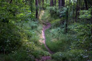 Photo shows a natural surface trail meandering through a lush green forest at Towner's Woods Park.