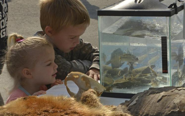a young boy and girl looking in to a fish tank with many small fish